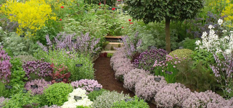 Award-winning herb garden from Jekka's Herb Farm at the Chelsea Flower Show
