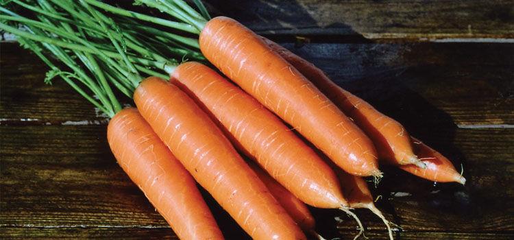 Carrot 'Eskimo'
