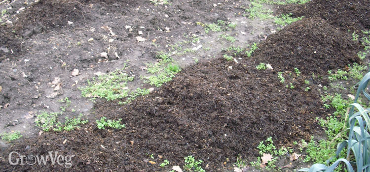 Mulching soil to help it warm up