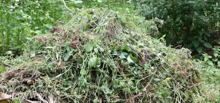 Short term compost heap
