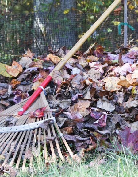 Raking leaves for leafmold