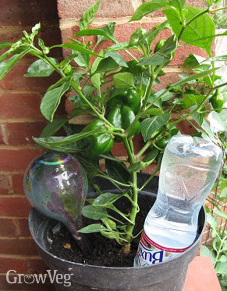 how to take extra water out of plants