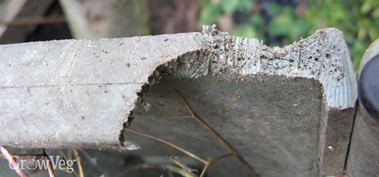 Rat-chewed compost bin lid