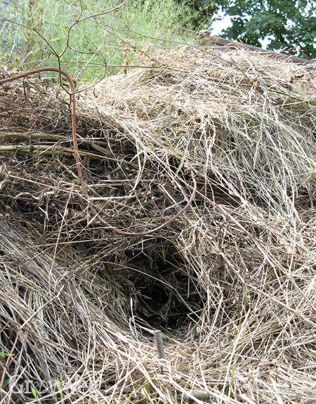 Rodent nest in garden