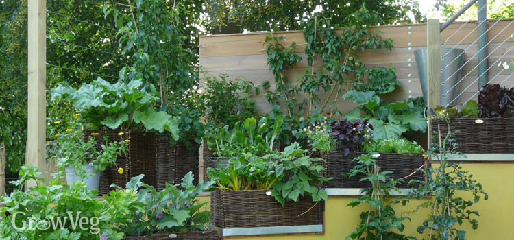 Small Garden Making Good Use Of Vertical Space