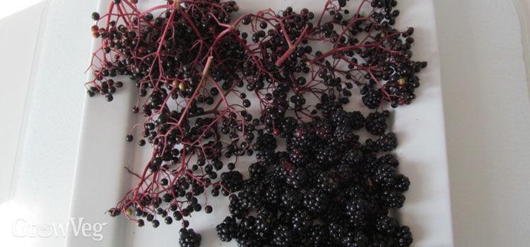 Blackberries and elderberries