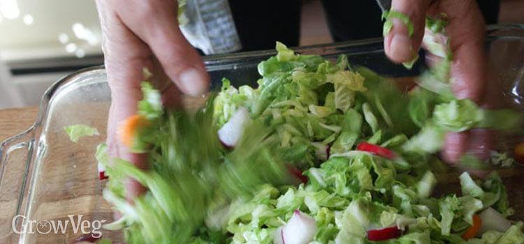 Preparing vegetables for fermenting