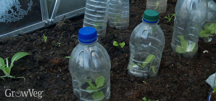 Cloches made from old plastic bottles