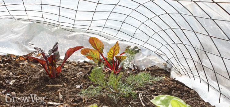 Plastic tunnel warming soil in vegetable garden