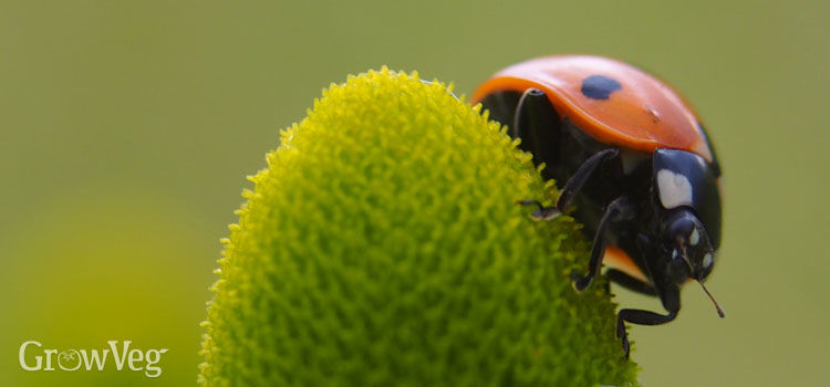 https://res.cloudinary.com/growinginteractive/image/upload/q_80/v1446407119/growblog/ladybird-2x.jpg
