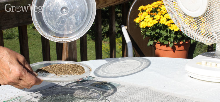 Drying seeds ready for storing and sharing