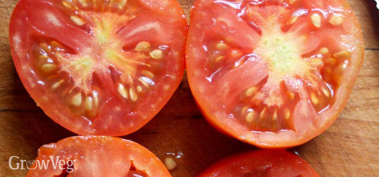 Tomatoes cut open to show the gelatinous seed sacs which inhibit germination