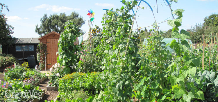 Arch supports for growing beans between raised beds