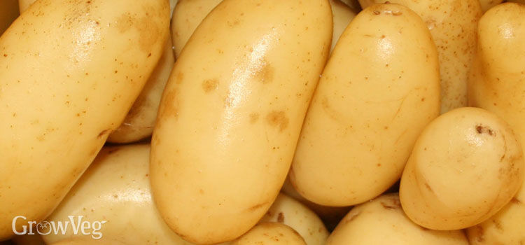 Potatoes (Early)