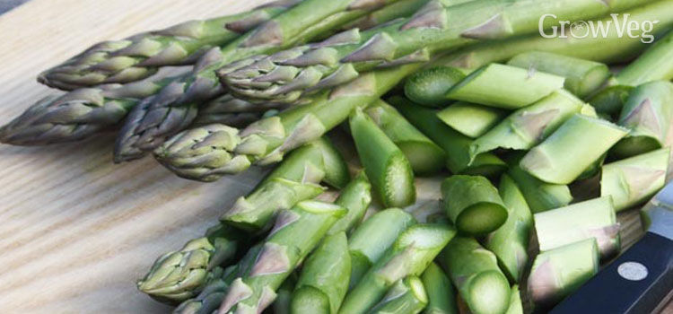 https://res.cloudinary.com/growinginteractive/image/upload/q_80/v1446935371/Plants/asparagus-2x.jpg