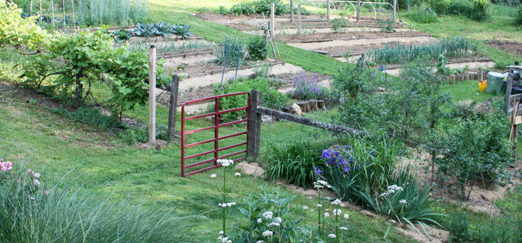 Looking Between the Beds: Vegetable Garden Pathways