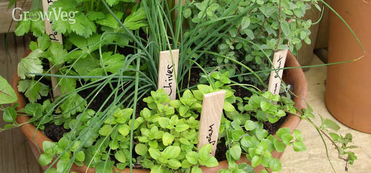 creative christmas gift ideas for gardeners