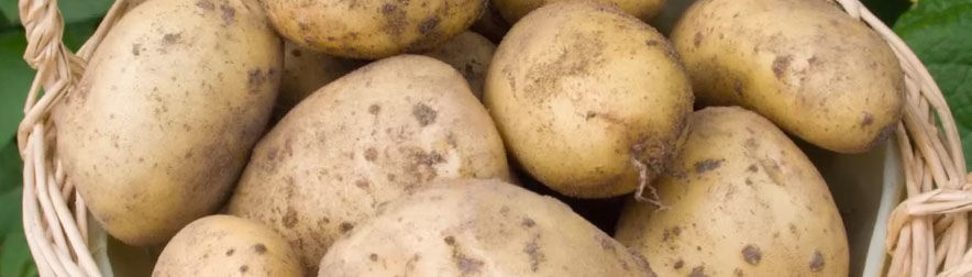 How to Choose the Best Potatoes to Grow in Your Garden