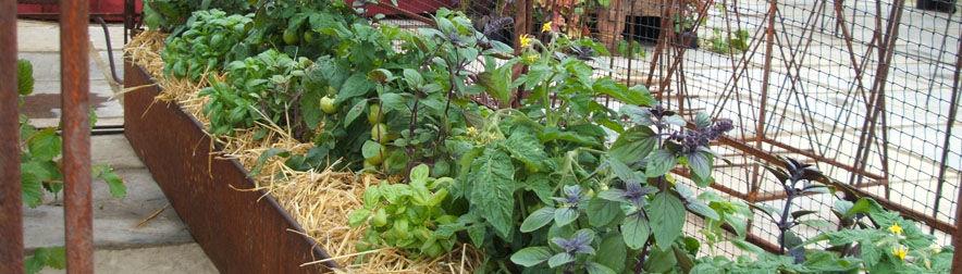Saving Water in a Vegetable Garden