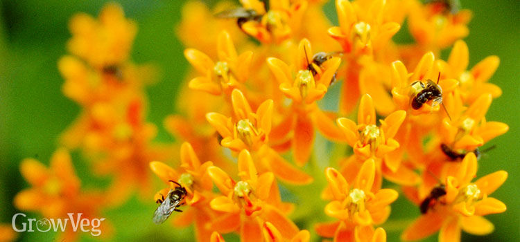 Best perennial flowers for bees beetles and butterflies mightylinksfo