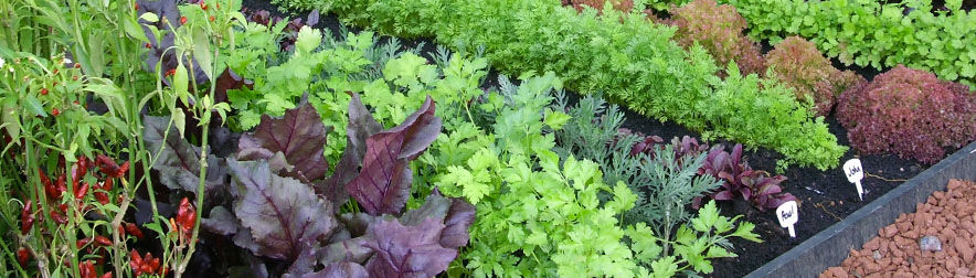 Grow Fruits and Vegetables in the Shade!