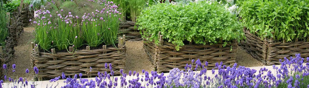 How to Preserve and Store Your Homegrown Herbs