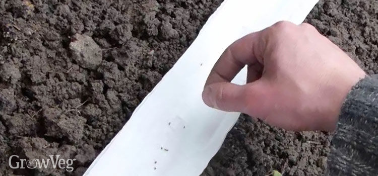 Lining a drill with toilet paper makes it easier to see seeds as you sow