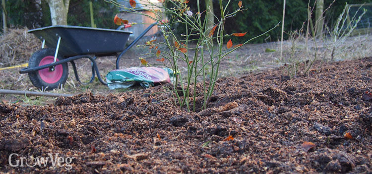 How To Beat Perennial Weeds Using Mulch