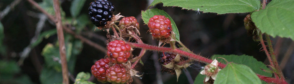 Foraging for Free Food: How to Hunt Out a Hedgerow Harvest