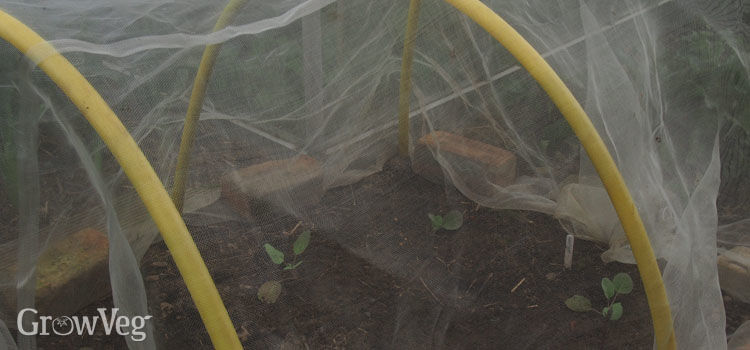 Mini hoop house made using recycled gas pipe