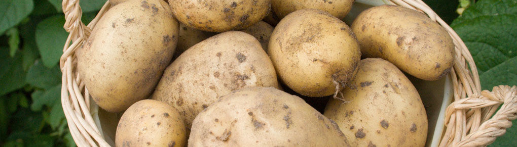 How to Grow the Best Potatoes in the World
