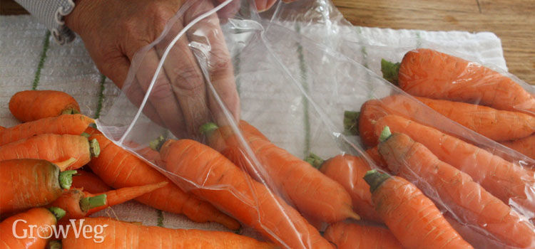 Checking stored carrots