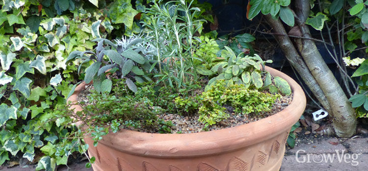 Herbs in a container