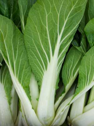 Cabbage (Chinese), also known as Pak Choi