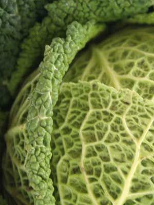 Cabbage (Medium Maturity)