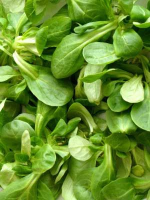 Lettuce (Lambs), also known as Corn Salad