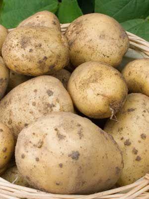 Potatoes (Maincrop)