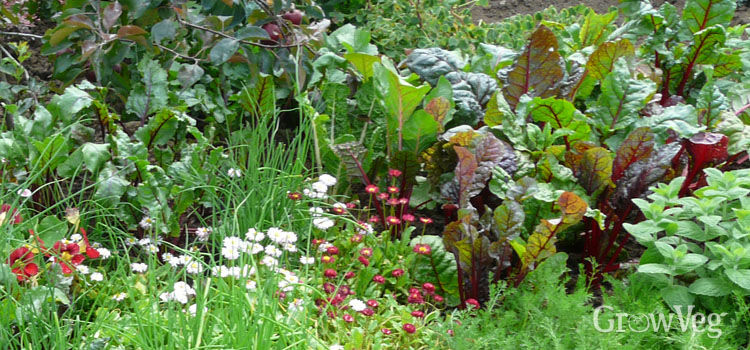 Flowers growing alongside beetroot