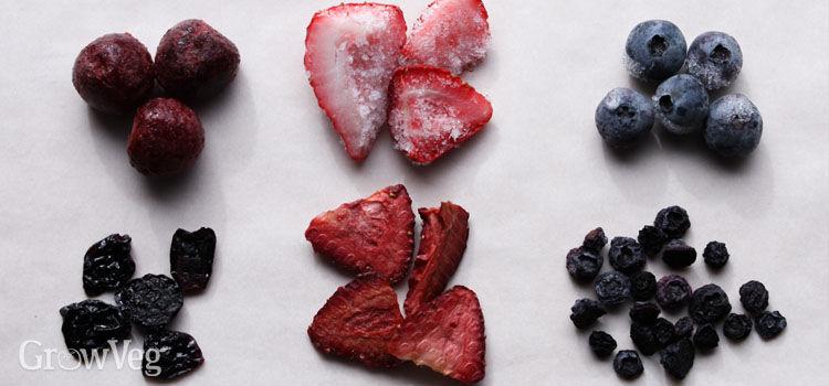 Dehydrated frozen berries