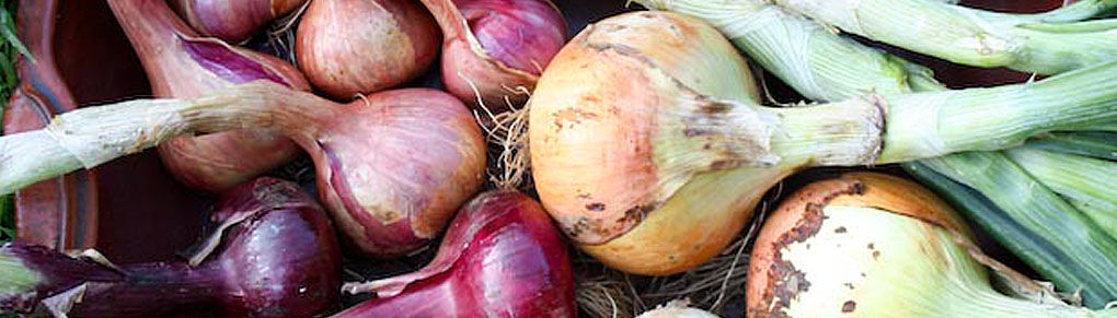 The Art of Harvesting Onions