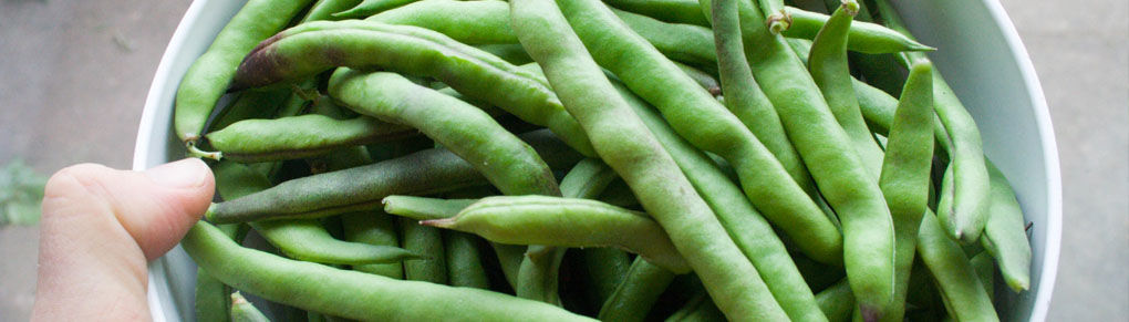 Quick Maturing Plants: 5 Fast Growing Vegetables to Try