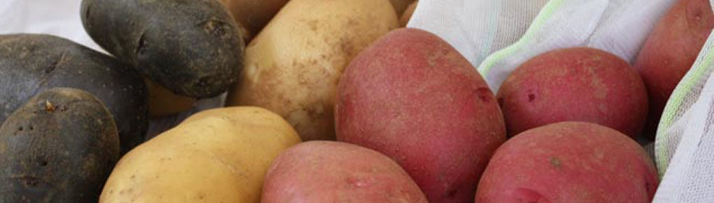 How to Cure and Store Potatoes