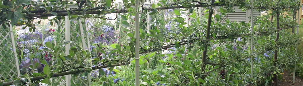 Cordon Fruit Trees - How to Get the Best Harvest From a Small Garden