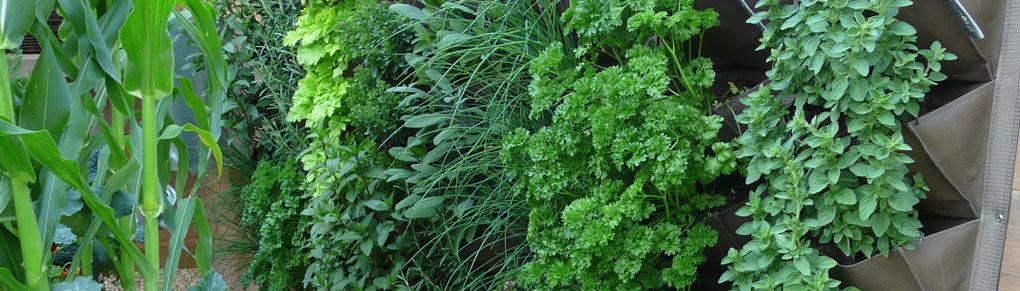 Vertical Gardening – Grow More in Your Garden!