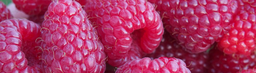 The Advantages of Growing Fall-Bearing Raspberries