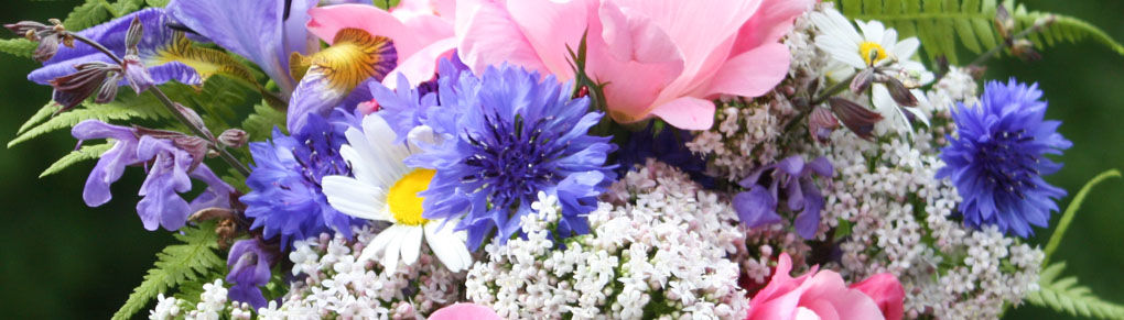 Growing Cut Flowers for Bouquets