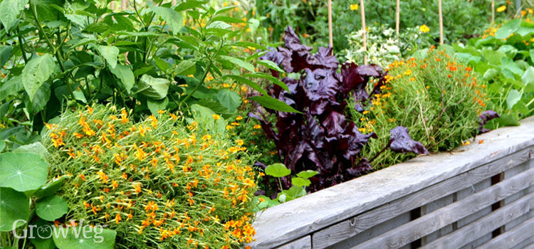 Vegetables and herbs in a small garden space