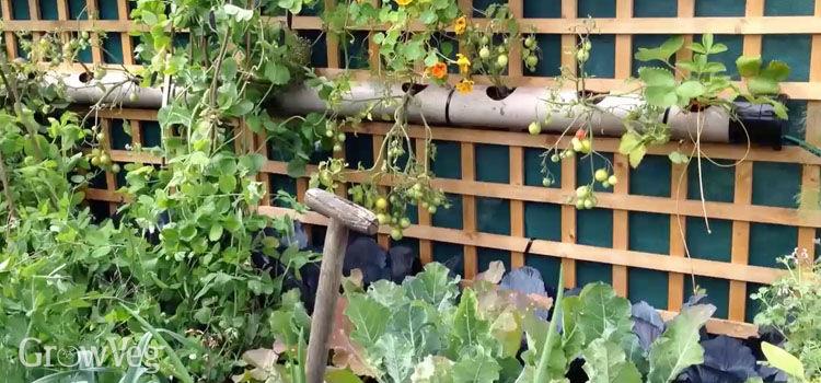 Productive small garden