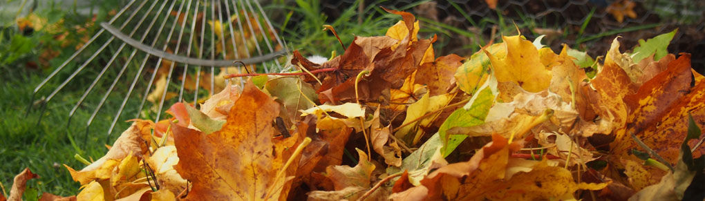How to Turn Fallen Leaves into Gardener's Gold