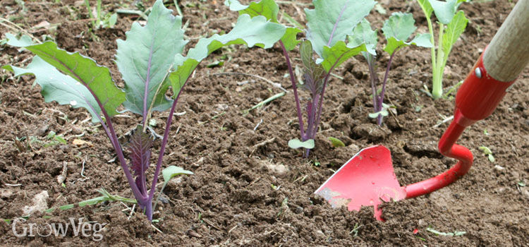 Best Ways To Weed Your Garden